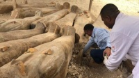 مصر تعلن عن كشف أثري ضخم لتوابيت فرعونية