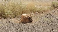 مقتل طفلة بعبوة متفجرة زرعتها المليشيات #الحوثية شمال شرقي مديرية الحشاء