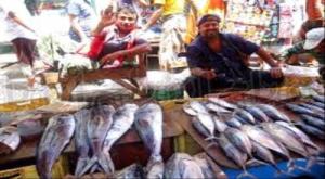 تحذير هام لبائعي الأسماك بالعاصمة عدن
